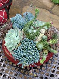 download succulent container ideas solidaria garden