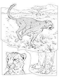 coloring book animals a to i cheetahs coloring books and animal