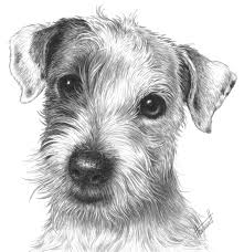 6 3 a2 isaac the jack russell drawspace