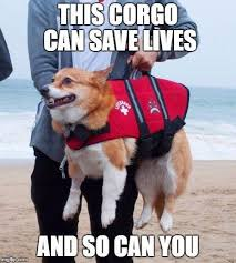 Dog Doctor Meme - wholesome dog memes