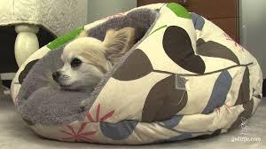 Dog Igloo Burger Bed Small Dog Bed Youtube