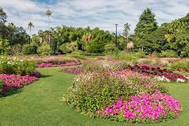 City Botanic Gardens Flowerbed With Pink Petunias In City Botanic Gardens Brisbane