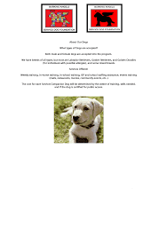 about our service dogs service dogs autism chicago service