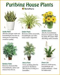 best plants for air quality most air purifying house plants 28 best for indoor outdoor