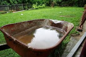 Eliminate Mosquitoes In Backyard by Mosquitoes Can Breed In The Oddest Places Here U0027s Where To Look