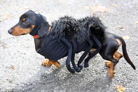 Dog Spider Halloween Costume Woof Night Dogs Dressed Hallowe