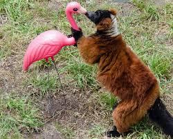 tacky lawn ornaments reborn as lemurs best friends mnn