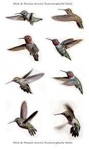 best 25 arizona birds ideas on pinterest pretty birds exotic