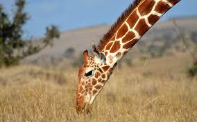 safari the 2017 world u0027s best safari outfitters travel leisure