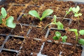 vegetable gardening tips archives veggie gardener