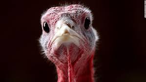 happy turkey day open mic phatmass