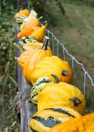 how to grow ornamental gourds in your garden with barbara pleasant