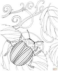 japanese beetle coloring page free printable coloring pages