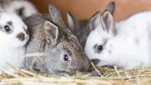 facts about dwarf rabbits that will kill you with cuteness