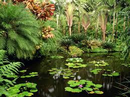images of plants how to grow plants the garden of eaden