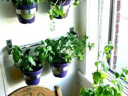 indoor herb garden wall chia herb garden instruction book herb garden kitchen herb garden