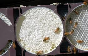 Harvesting Honey From Top Bar Hive Top Bar Hives And Comb Honey Honey Bee Suite