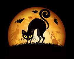 funny halloween pumpkins wallpaper 2560x1600 26424