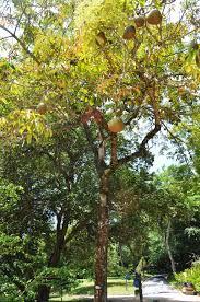 native plants in brazil rio de janeiro botanical gardens brazil