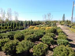 michigan native plant nursery barker creek nursery let our experience work for you michigan us