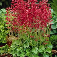 perennial plants sustainable gardening high country gardens