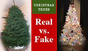 trees real vs carycitizen