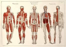 Anatomy Of Human Body Pdf Tag Human Anatomy Muscular System Pdf Archives Human Anatomy Charts