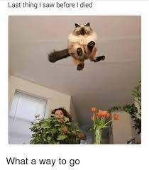 Way To Go Meme - last thing i saw before i died what a way to go meme on awwmemes com