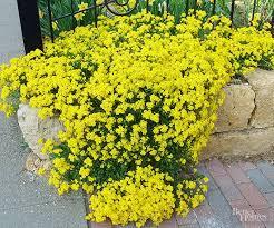 best plants for rock gardens rock garden plants perennials and