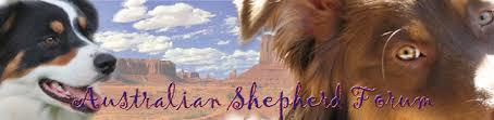 australian shepherd forum australian shepherd forum index