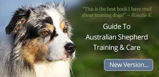 buy a australian shepherd is the australian shepherd the right breed for you