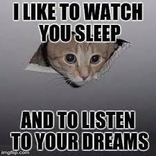 Ceiling Cat Meme - ceiling cat memes www energywarden net
