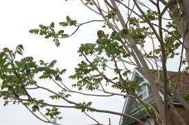 tree removal toronto ontario