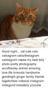 Cute Kitty Memes - 25 best memes about good night cat good night cat memes