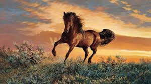 mustang horse photo collection mustang horse wallpapers