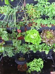 mei 2016 aquaponics gardening system