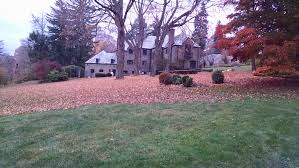 clean ups and other services polizzi landscaping inc