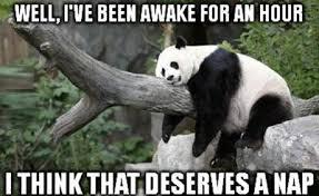 Panda Meme - panda wake hour nap jpg