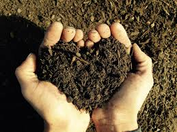 you can u0027t buy a perfect soil soilutions