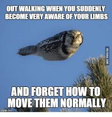 Walking Memes - 25 best memes about owl walking owl walking memes