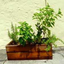 mini gardens are growing quickly ready grow gardensready