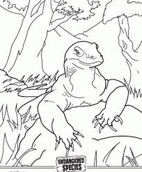 komodo dragon coloring page free printable coloring pages
