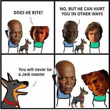 Who Hurt You Meme - you will never be a jedi master does he bite know your meme
