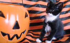 halloween kittens keep your animals safe and happy this halloween peta