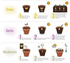Vegetables You Can Regrow by Infographic Regrowing Fruits U0026 Vegetables From Scraps Recoil