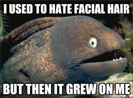 Memes Jokes - bad joke eel memes comics and memes