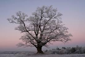 trees top 10 sciencenordic
