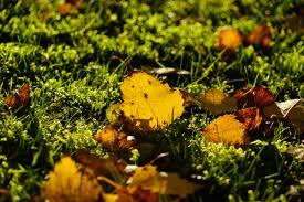 free images landscape grass plant ground sunlight leaf