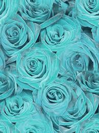 Teal Roses Teal Roses Theme Teal Roses Theme For Com