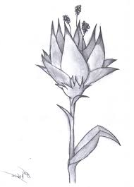 flowers drawings in pencil pencil drawing of a flower amazing